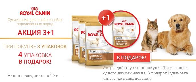 Royal Canin: 3+1 упаковка в подарок!