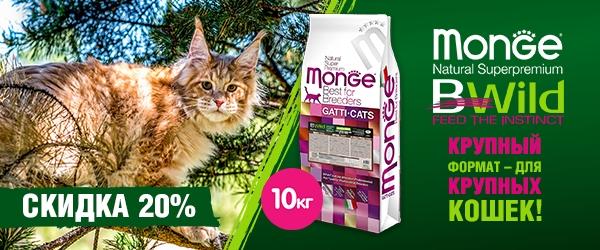 Скидка 20% на Monge Bwild Grain Free для крупных кошек