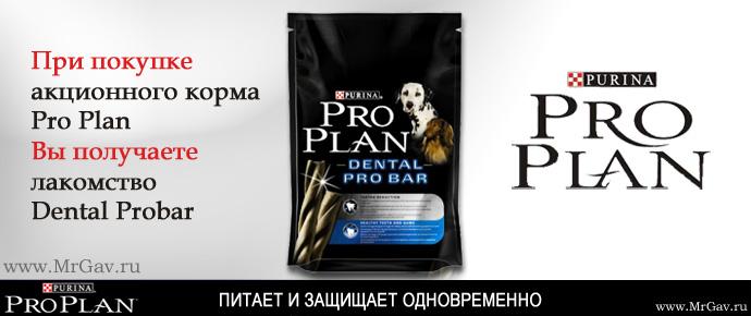 Подарок к Pro Plan
