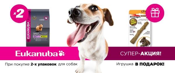 При покупке 2-х упаковок Eukanuba - игрушка Petstages в подарок!