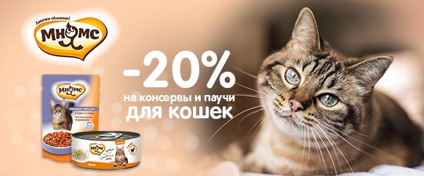 Отмечаем всемирный день кошек!