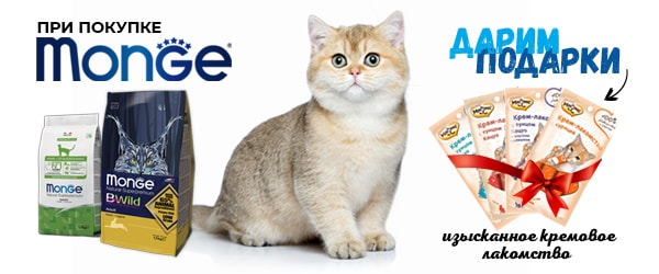 При покупке корма Monge для кошек - лакомство в подарок!