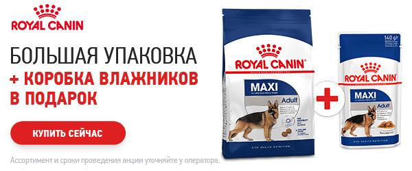 При покупке корма Royal Canin - паучи в ПОДАРОК!