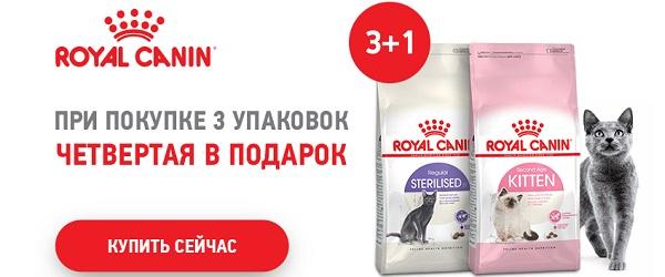При покупке трех упаковок корма Royal Canin - 4-я в подарок!