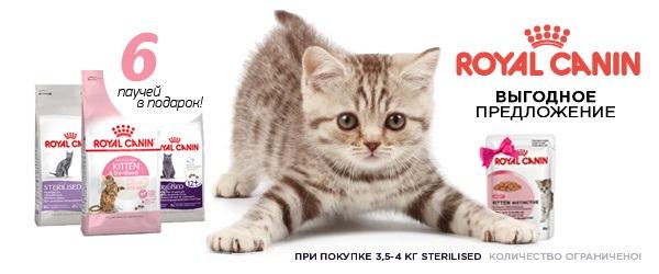 При покупке 4-х кг Royal Canin для стерилизованных - 6 паучей в подарок!