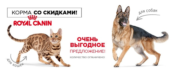 -10% на сухой Royal Canin