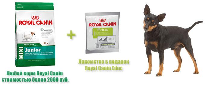 Лакомство Royal Canin Educ при покупке корма для собак!