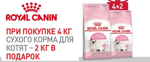 При покупке 4 кг Royal Canin для котят – 2 кг в подарок!