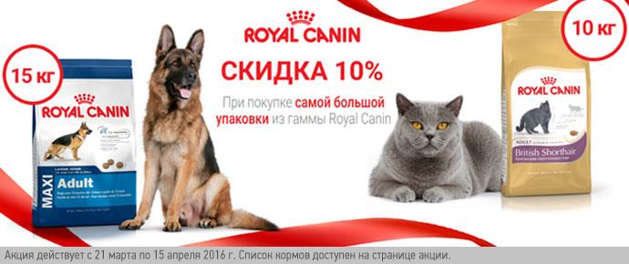 Скидка 10% на большие упаковки Royal Canin!