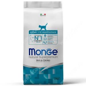 Monge Kitten