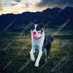 Светодиодный мяч для собак NiteIze GlowStreak, красный